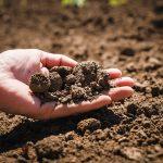 【農学部特集】大きく広がる農学系学部の可能性