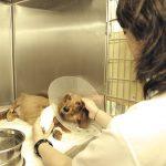 【獣医学部を目指す人へ!】人の健康や生活の安心に広く貢献する獣医学